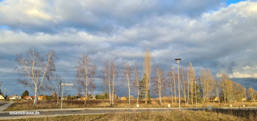 degewo Baufeld: Blick auf die Seidenschwanzstraße